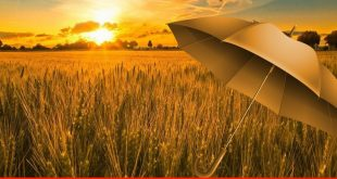 Effective execution of crop insurance policy required