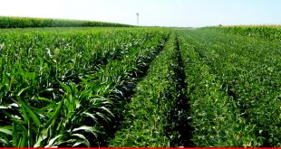 Private sector's role in developing agri-business in Balochistan