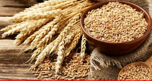 Time to reduce Pakistan's rising wheat rate