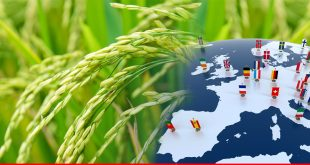 Upcoming rice crops likely to push Pakistan's export to EU countries