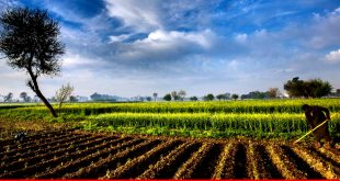 Time to make agriculture sector important again