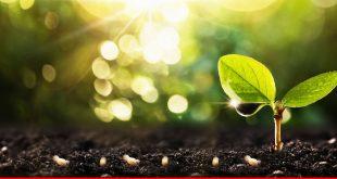 Byco Distributes 2 million Moringa Tree Seeds through Plantation drive