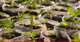 Planting 10 billion trees-go getting goal