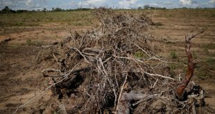 The deforestation risks lurking in the banking sector