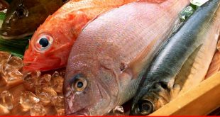 Growth of fisheries business in Balochistan a focal point