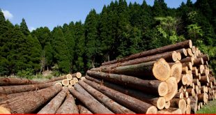 Forestry to be looked at as a lucrative investment