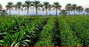 Modern farm plan for Balochistan
