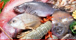 Alluring Balochistan's fishery and shrimp trade