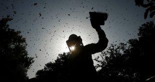 To feed 10 billion people, we must preserve biodiversity