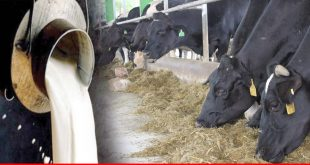 Need of dairy production motivation in Pakistan