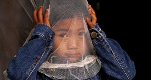 Malaria could be gone by the middle of the century. Here's how