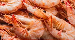 Dim future of shrimp business in Pakistan