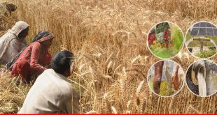 Plans underway to make Punjab, KPK self-reliant in agriculture growth