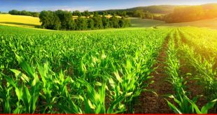 Steps to be taken to uplift agriculture yield