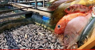 Venture for fisheries and aquaculture sectors growth