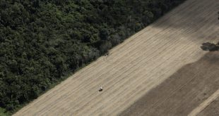 How regenerative agroforestry could solve the climate crisis