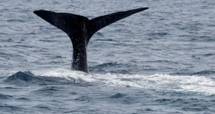 Saving the whales is more important than planting trees to stop climate change. This is why
