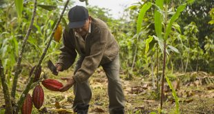 Chocolate you can trace back to the tree - a new vision of fairer, greener trade