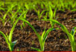 Growth in agriculture sector and future plans ahead