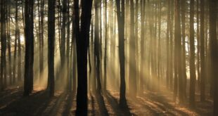 Planting trees can be one tool to fight climate change - if we do it right