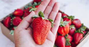 Here's what happened when AI and humans met in a strawberry-growing contest