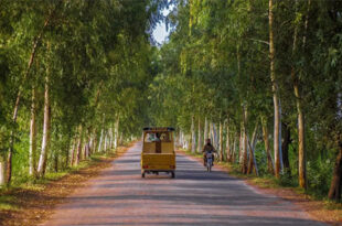 How Pakistan is aiming for a green recovery from the pandemic