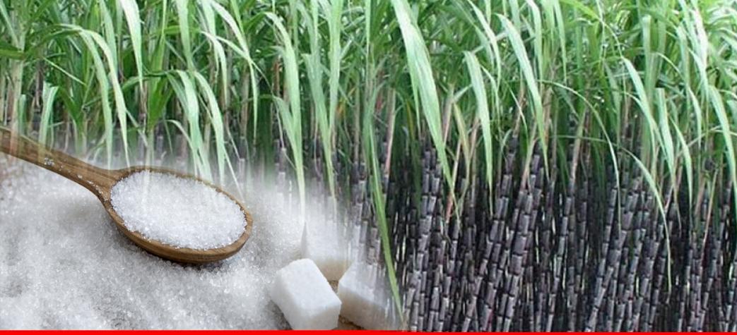 Documenting sugar sector