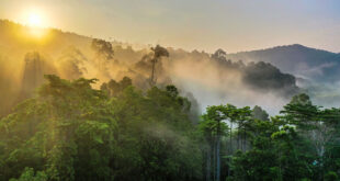 Greening the planet- we can't just plant trees, we have to restore forests