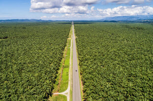 Deforestation is driven by global markets