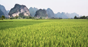 How special soil observatories in China are helping to create more sustainable agriculture